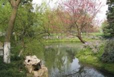 西湖桃花图片