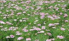 太子湾的小花图片