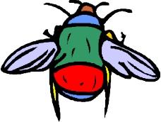 昆虫蝴蝶0495