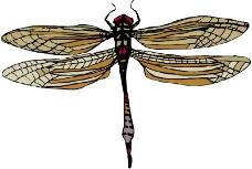 昆虫蝴蝶0181