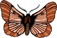 昆虫蝴蝶0960