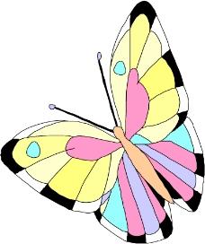 昆虫蝴蝶1040