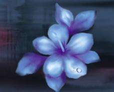 韩式花款图片