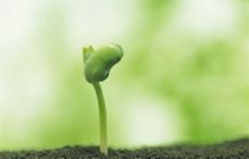绿芽新生图片