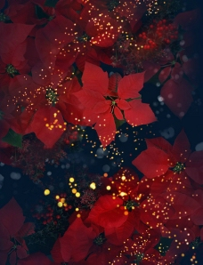 7张高清漂亮花纹背景图片素材
