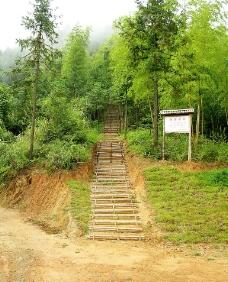 竹林小径图片