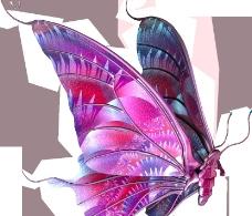 美丽的蝴蝶Butterflies图片