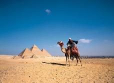 沙漠骆驼图片