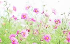 美丽野花图片