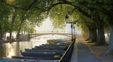 河边树荫图片