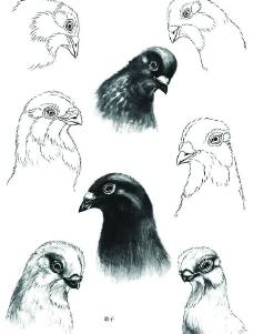 百鸟画谱图片