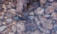水中石头图片