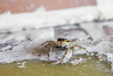 小蜘蛛图片