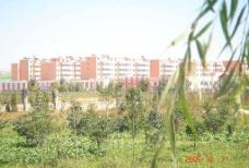 草地  房屋建筑图片