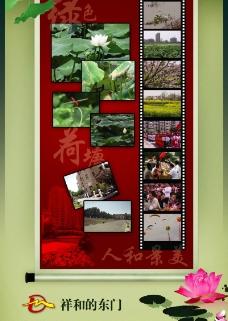 綠色荷塘圖片
