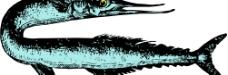 鱼儿 鱼图片