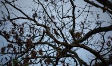小鸟5图片