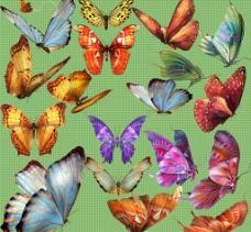 彩蝶纷飞图片