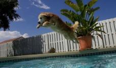 小狗3图片