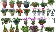 实用盆栽花卉PSD源文件图片