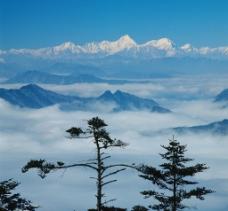 雪山云海迎客松图片
