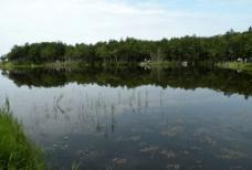 知床五湖图片