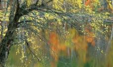秋色宜人图片