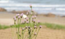 青岛海边随拍图片