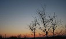 夕阳枯树图片