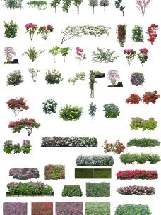 50张PSD格式后期花素材图片