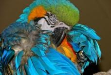 美丽的鹦鹉图片
