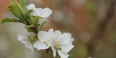 洁白的花朵图片