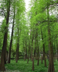 绿色园林图片