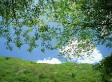 春天树荫图片