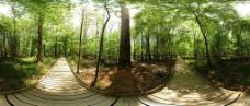 森林树木景色 全景360图片
