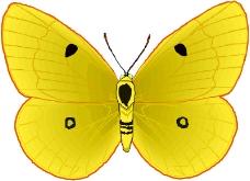 昆虫蝴蝶0673