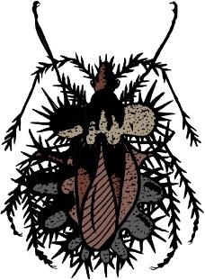 昆虫蝴蝶0975
