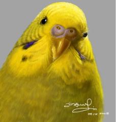 鼠绘鹦鹉图片