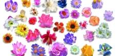各种鲜花 百花齐放图片